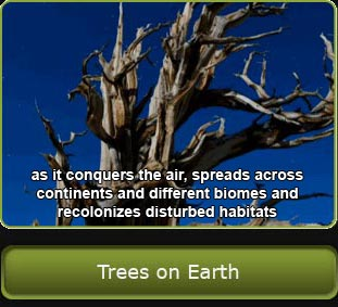 Photo of a Bristlecone pine, link to the Trees on Earth section.