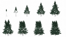 Graphic representation of poplars based upon mathematical growth models