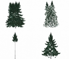 Graphic representation of four poplar with heteregeneous crowns