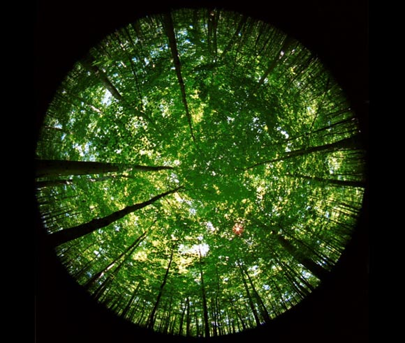 Photo of the opening of a forest canopy