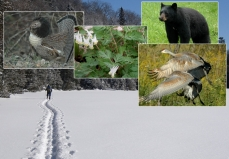 Montage photo de faune et flore de l'Algoma Highlands Conservancy